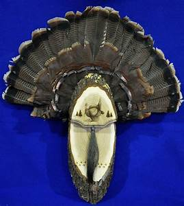 turkey huntingturkey fan turkey fan mount turkey fan With turkey fan mount template