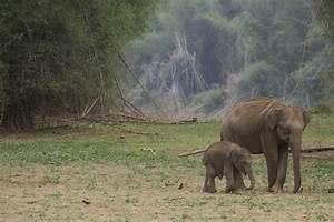 The Future Asian Elephant - ThingLink