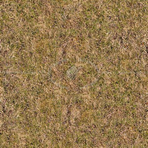 Dry grass texture seamless 12913