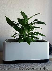 Pflanzen Luftreinigung Schlafzimmer : wozu braucht man eine airy box und was ist ein intelligenter blumentopf ~ Eleganceandgraceweddings.com Haus und Dekorationen