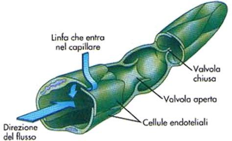 vasi linfatici medpopwiki af 4 19 sistema linfatico