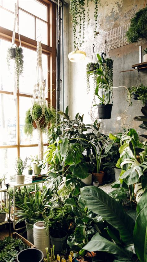 pflanzen für wohnung wohnung wohnideen pflanzen garten