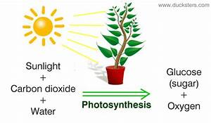 Biology For Kids  Photosynthesis