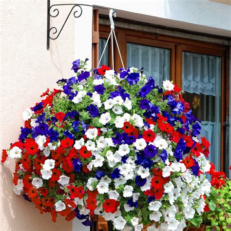 hanging flower baskets red white and blue hanging basket in my garden pinterest gardens plants and container