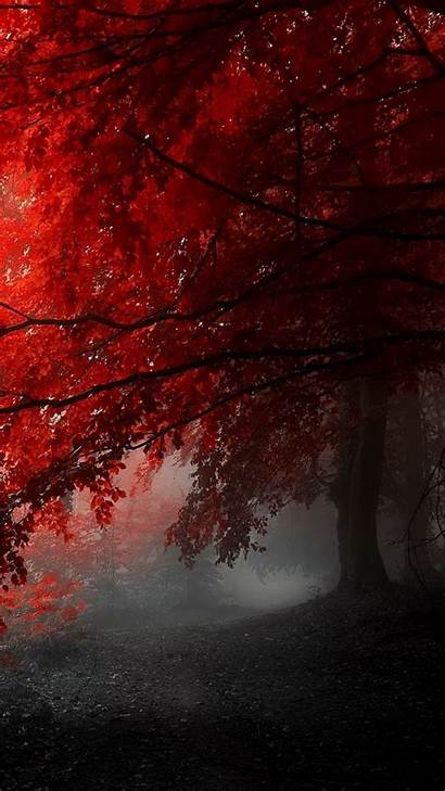 1080 1920 Wallpapers Tree Nature Foggy Mobile