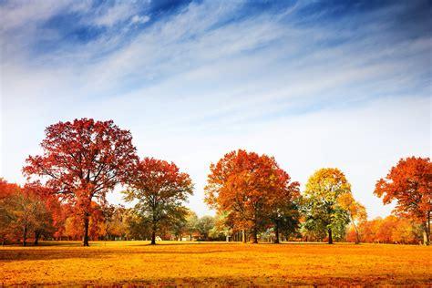 trees, Grass, Nature, Autumn, Sky Wallpapers HD / Desktop ...