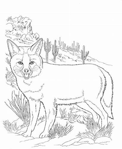Coloring Animals Pages Desert North Fox Printable