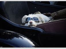 The Story of America's Sidecar Dogs is a new documentary