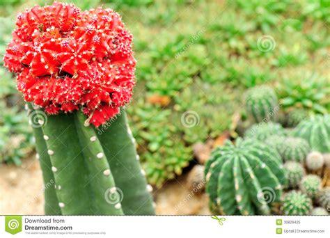 cacti garden royalty free stock photo image 30829425
