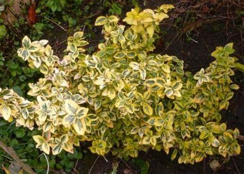 shade loving perennials uk shade and dry areas gardeners tips