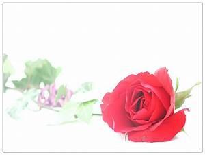 Blume Der Liebe : rosen blumen der liebe rosen 4 bild foto von peter wolf v miriquidi staufen aus ~ Whattoseeinmadrid.com Haus und Dekorationen