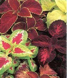 comercializadora de plantas tu jardines gitana