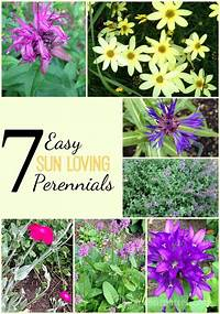 sun loving shrubs 7 Easy Sun Loving Perennials Worth Planting