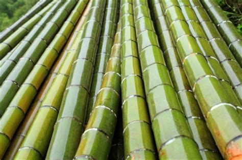 How To Start Nursery Plant Business by How To Start A Backyard Bamboo Nursery For 800
