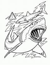 Coloring Pages Sharks Shark Print sketch template