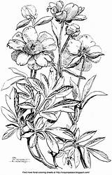 Peony Coloring Peonies Would Fun Reds Pinks Multiple Come sketch template