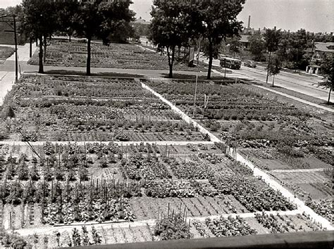 victory gardens chicago chicago s peterson garden project built for victory