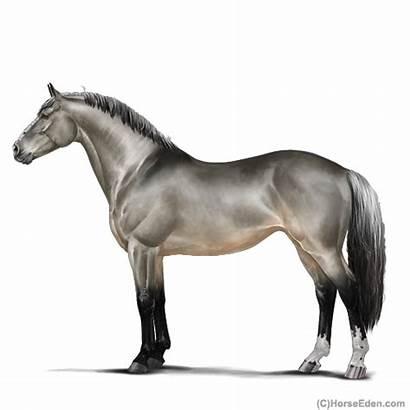 Horse Eden Eventing Eee Irish Horseeden