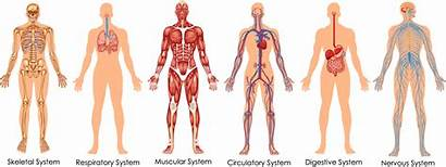 Health Human System Transparent Functional Systems Clipart
