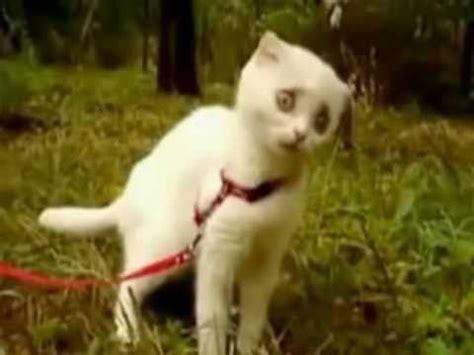dramatic wtf cat youtube