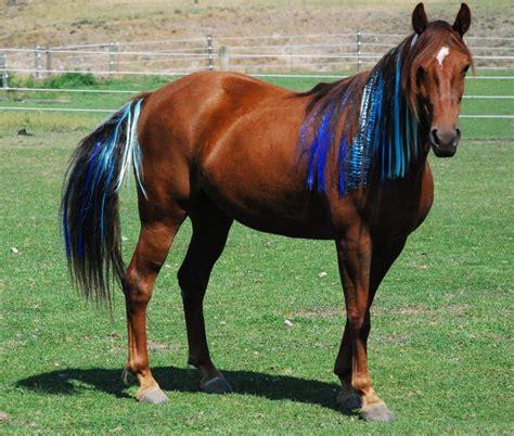 horse horses pony pretty mane turning into horsenation colorful