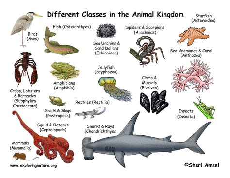 Classification of Animals Animal Classes