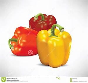 Peppers Illustration Stock Vector  Illustration Of