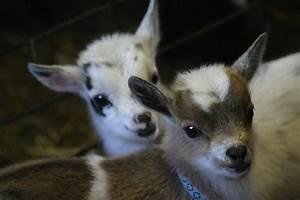 blog_yummypets_goat10_06_14