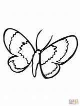 Moth Coloring Lepidoptera sketch template