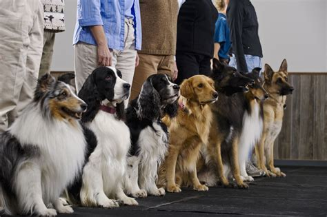 How To Get Your Dog Trainer Certification