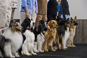 How to get your dog trainer certification for Dog training certification schools