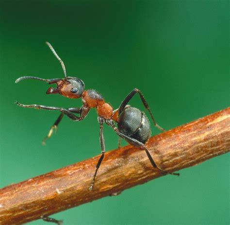biologie ameisen orientieren sich  optischen landmarken