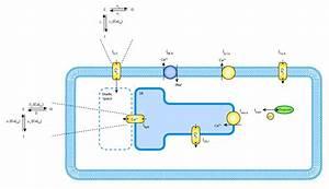 A Simplified Local Control Model Of Calcium