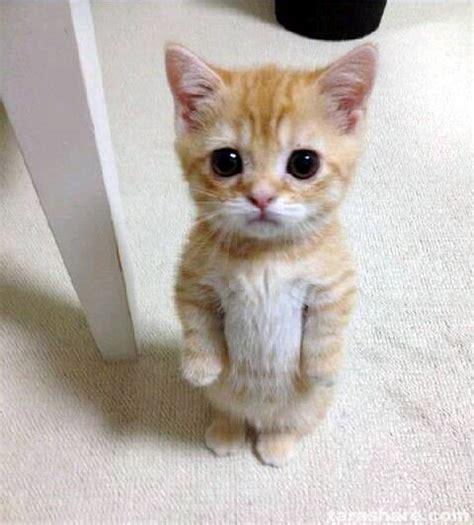 Unhappy Cat Meme - unhappy cat meme generator image memes at relatably com