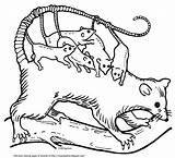 Opossum Joeys Mamma Largest Version sketch template