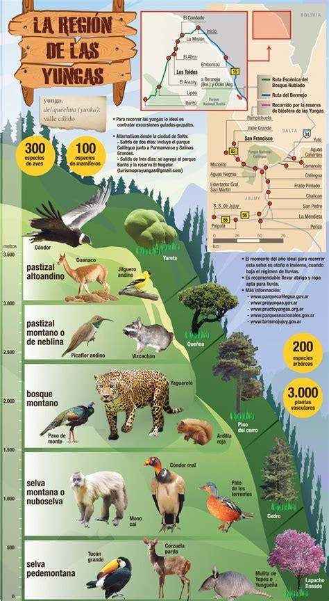 infografia de las yungas descubri la flora  la fauna