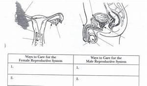 Female Reproductive System Diagram Quiz