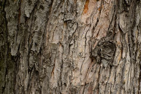tree bark texture high quality  backgrounds