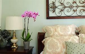decoration florale ideale lorchidee chez vous With chambre bébé design avec livraison orchidees