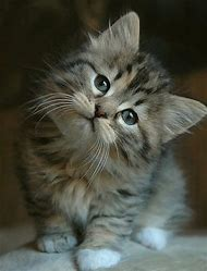 Cute Adorable Kittens and Cats