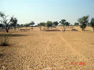 Thar Desert - Desert Between Pakistan & India - XciteFun.net