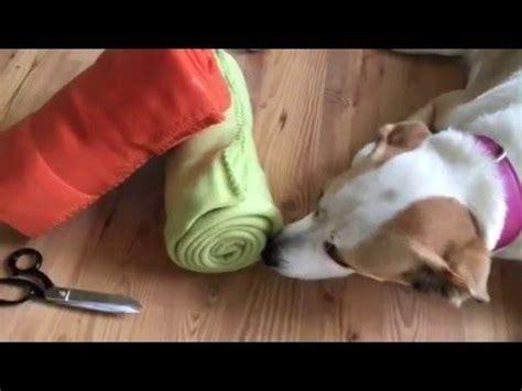hundespielzeug selber bauen schn 252 ffelteppich selber machen hundespielzeug geschenke hunde