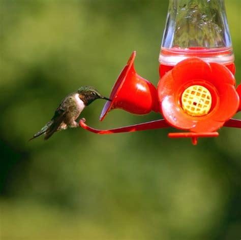 pet hummingbird for pet pinch waist glass hummingbird feeder 203cp 8oz 9701