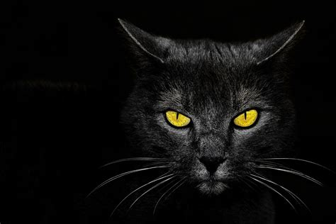 Black Cat Eyes Wallpaper Wallpapersafari