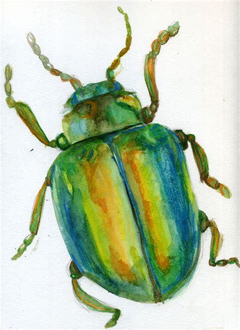 mc drawn beetlesketch watercolour