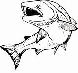 Trout Coloring Apache Tocolor Drawing Fish Drawings sketch template