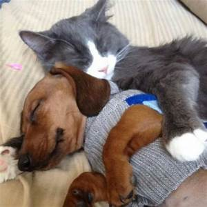 Nap Time: cats sleeping with dogs - Incredible Cuteness ...