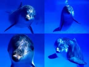 Dolphin Ocean Sea Life