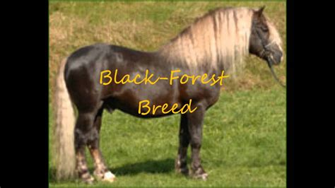 Top 25 Ideas About Nice Horses On Pinterest