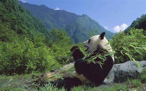 Download Nature China Wallpaper 1680x1050